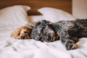 honden in bed
